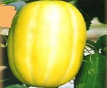坐月子能吃香瓜吗?坐月子应少吃寒性果蔬